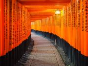 fushimi inari torii cropped