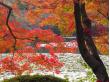 龍安寺鏡容池(123RF)