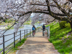 Cycling tour sakura cropped