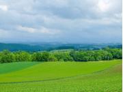 Biei field cropped