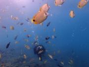 Diving_MEX