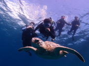 Diving_Hnu_MEX