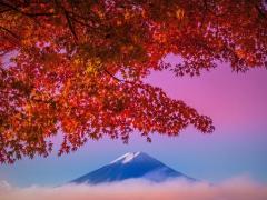 09142016_Fuji Maple 4