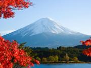 09142016_Fuji Maple