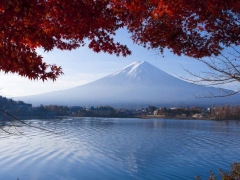 09142016_Fuji Maple 3