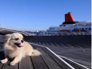 yokohama harbor dog cropped