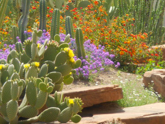 Hoover Dam Chocolate Factory Botanical Cactus Garden Sightseeing Tour Las Vegas Tours