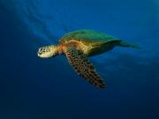 Hawaii Nautical 03