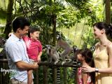 singapore_wrs_singapore-zoo-park_property-of-WRS_croppedszooresize