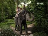 singapore_wrs_singapore-zoo-park_property-of-WRS_SZ Elephant Ride_with-logo-01