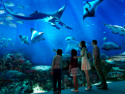 singapore_sentosa_SEA-aquarium_rws_ocean-gallery