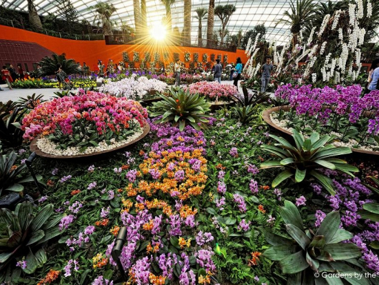 explore gardens by the bay singapores latest garden attraction on a private tour included in the tour is a convenient and hassle free pick up and - Garden By The Bay Annual Ticket