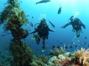intro_diver_2