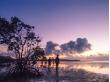 女子旅-西表島早朝カヌーツアーの風景4マングローブと海