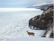 迫力のある冬のオホーツク海
