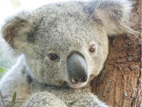 オーストラリアの動物とふれあい体験