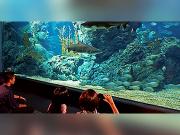 SEA LIFE Bangkok Ocean (6)