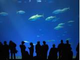 grayline_aquarium03