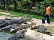 underwater_World_and_Crocodile_Farm (4)