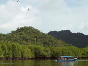 eagle watching langkawi mangrove forest