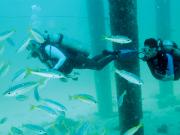 Pulau_Payar_Marine (2)