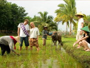Langkawi island farmer and travelers in rice field