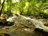 rainforest (11)