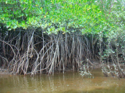 Mangrove_Swamp_Cruise (1)