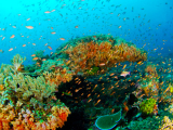 Bali_Diving_Day_Trip_at_Blue_Lagoon_and_Jepung (2)