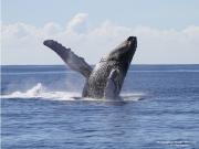 Whales 2014 Season8381-s1