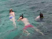 3-10-14_snorkeling_std(600x450)
