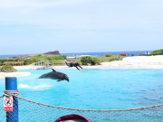 VELTRA - Dolphin Show 13