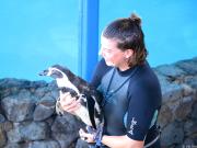 VELTRA - Penguines 04