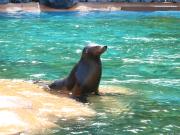 VELTRA - Sea Lion 04
