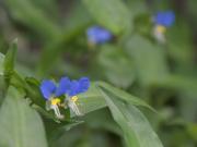 歩けば足元に花が咲いていることに気づきます。