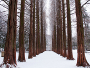 nami island in winter