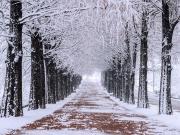 nami island winter