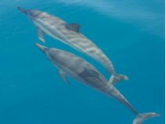 Ocean Encounters 01