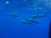 Ocean Encounters 02