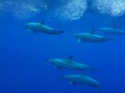 Ocean Encounters 03