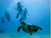 SNUBA Turtle 3