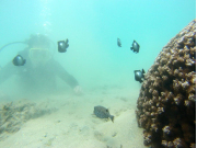 boxfish_dascyllus