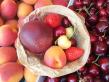 alan_ver_fruits
