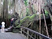 Area around monkey forest