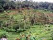 Rice-Terrace