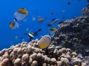 snorkeling 02