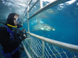 australia_SA_port-lincoln_shark-cage-diving_copyright_Calypso-Star-Charters_35