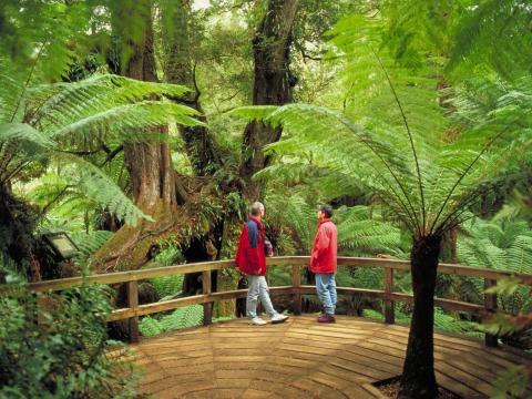 Rainforest eco tour