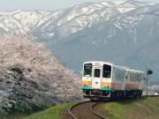 VT002 長井フラワー線(桜)