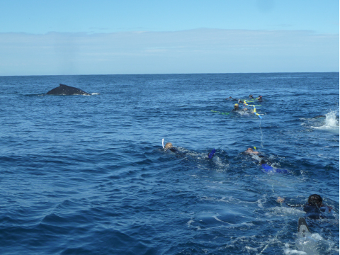 Swimmers with whale coming close